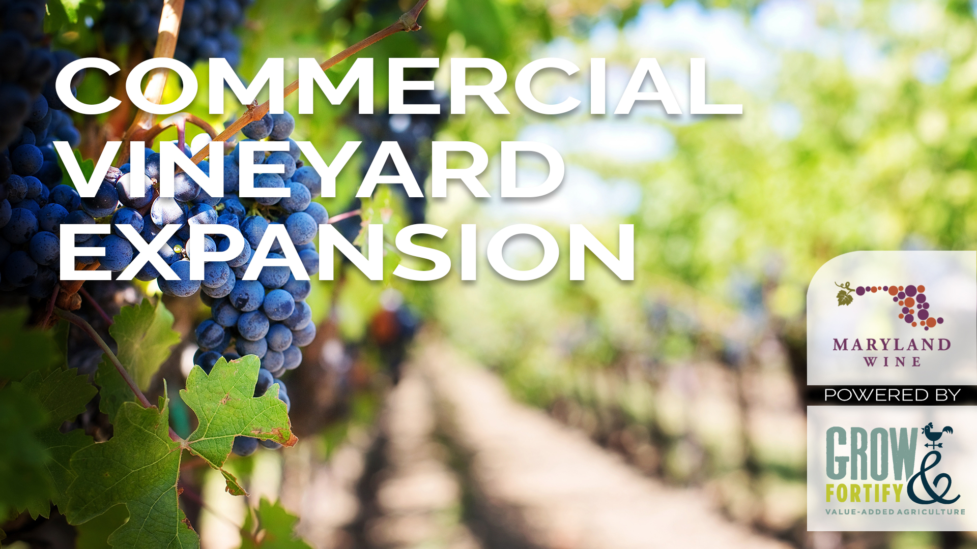 Commercial Vineyard Expansion Course Launches